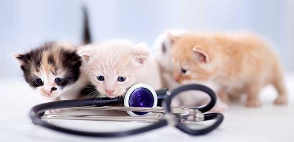 Is Your Pet Sick? Recognising Common Emergencies