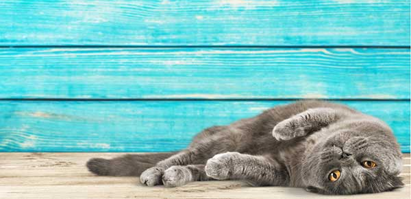 The Biggest Risks to Cats in The Warmer Months