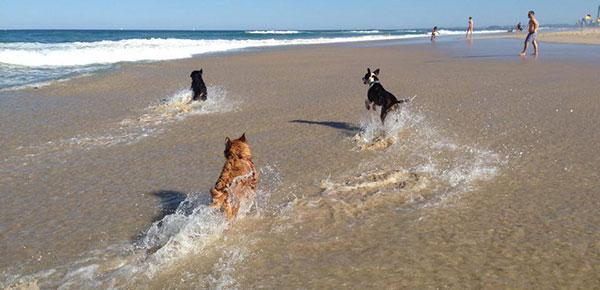 5 Dog Friendly Beaches & Parks