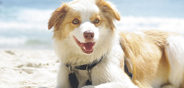 Preventing Heat Stroke In Your Furry Family Member