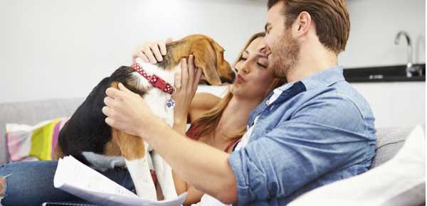 The Importance of Pet Insurance