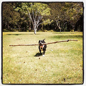 stick_1