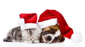 Kitten and puppy with Santa hats on