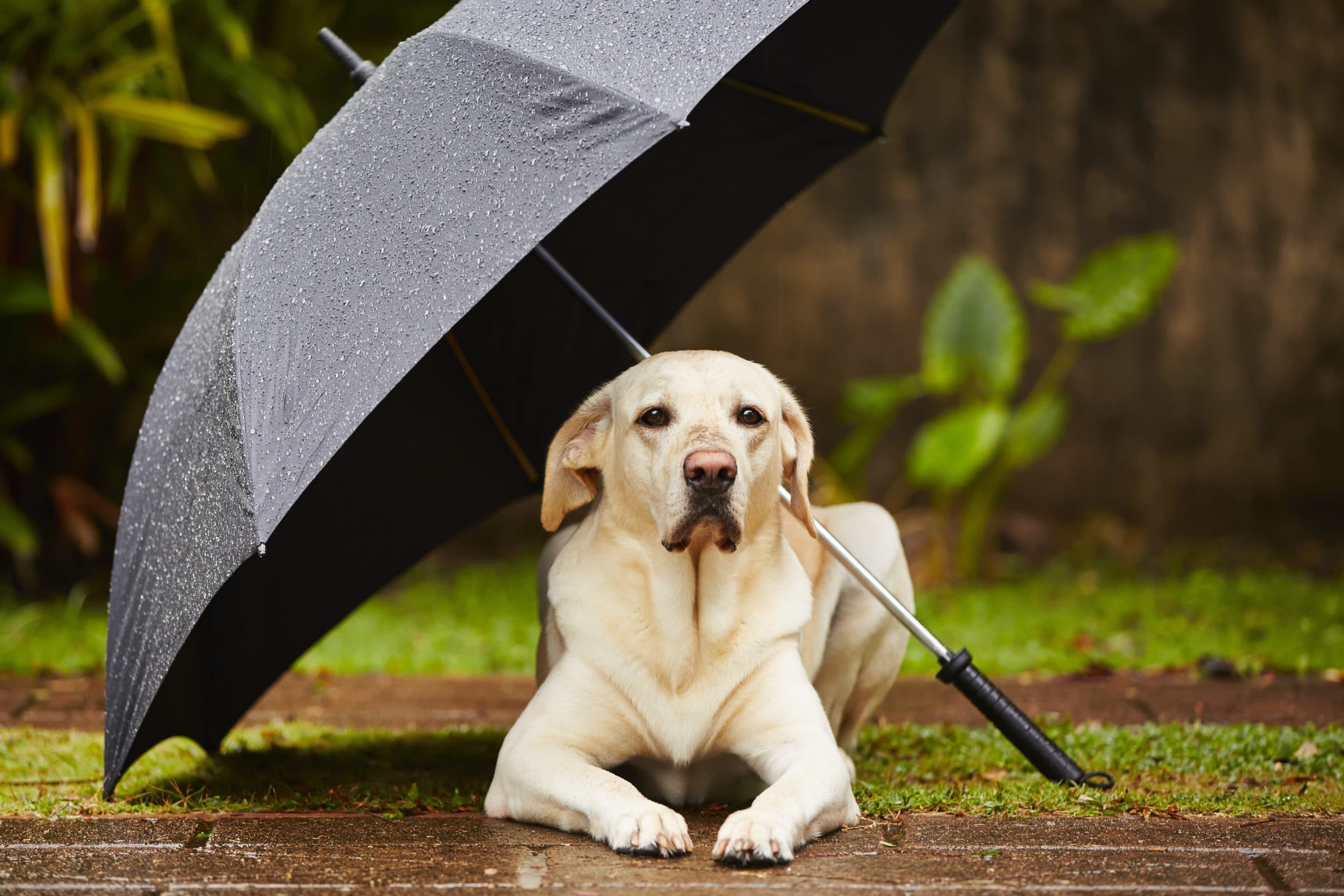A Guide to Managing the Storm-Phobic Pet