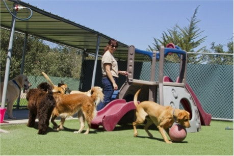 Choosing The Right Boarding Facility For Your Pet