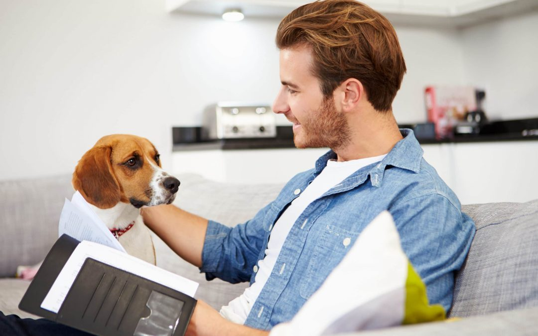 Choosing The Right Pet Insurance Policy: What to look for when choosing pet insurance for your furry family member