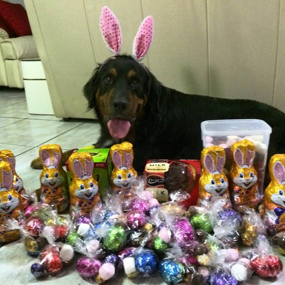 EASTER: CHOCOLATES AND YOUR PET – A DEADLY COMBINATION