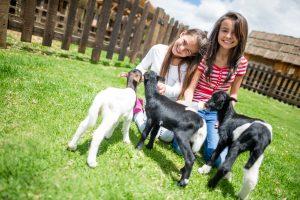 Girls feeding milk the goats at an animal farm