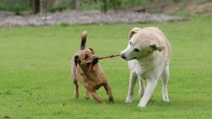 dog-attack-blog-pic-3