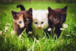 Cats on grass flower field background.