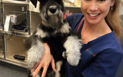 Brooke Shampers Animal Emergency Service