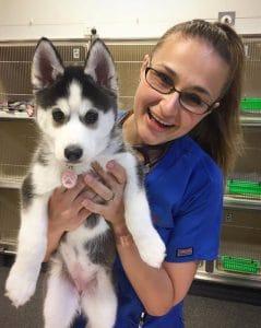 Hayley Strain Pet ICU