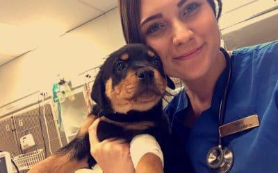 Lee Imperatice Animal Emergency service