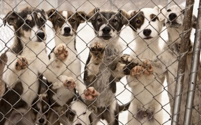 Overbreeding: A Major Animal Welfare Issue