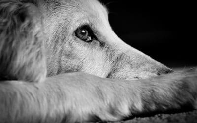 How to Be Prepared for a Pet Emergency