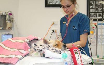 Veterinary Nurse (Critical Care),Underwood