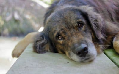 5 Common Signs Your Pet is in Pain