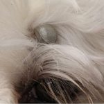 What is a paralysis tick