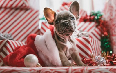 A Pet Owners Guide to Surviving the Festive Season