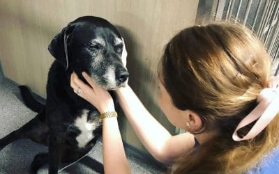7 Signs Your Pet Might Have Cancer