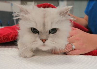 Keep your pets away from tinsel this holiday season