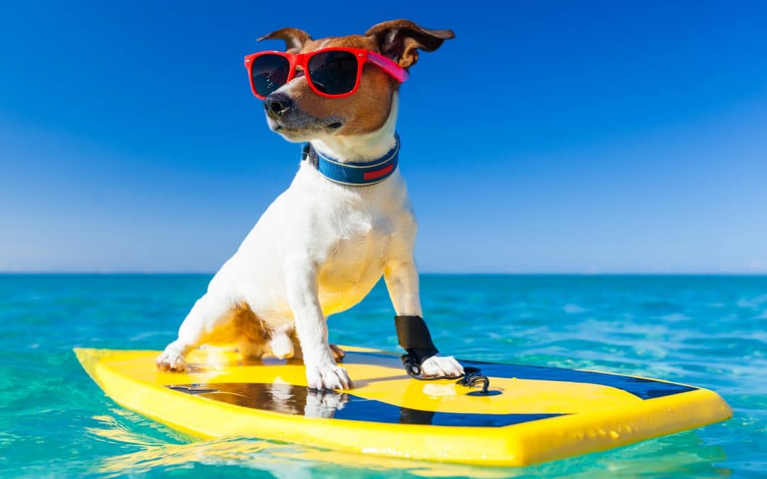 Three Ideas to Keep Your Pooch Cool on Australia Day