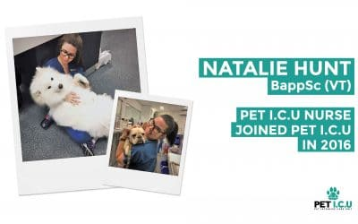 Get to know Natalie Hunt of the Pet ICU