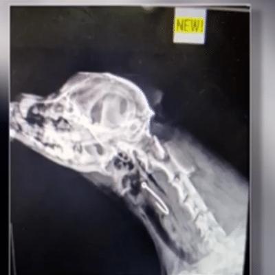 Unlucky pup swallows fishing hook