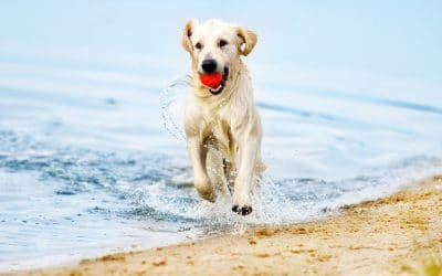 Top 4 Beach Dangers for Dogs