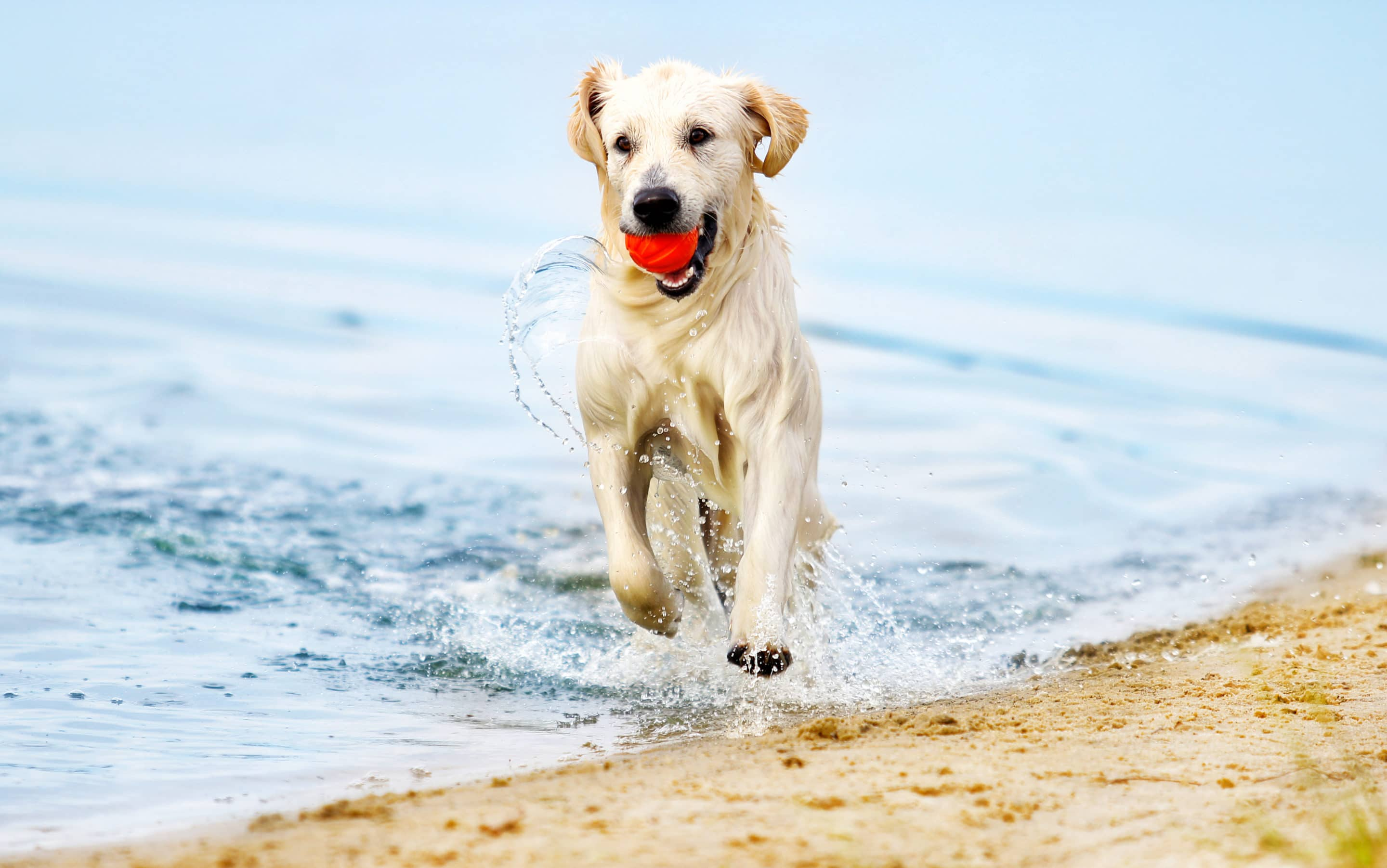 Top 4 Beach Dangers for Dogs | Animal Emergency
