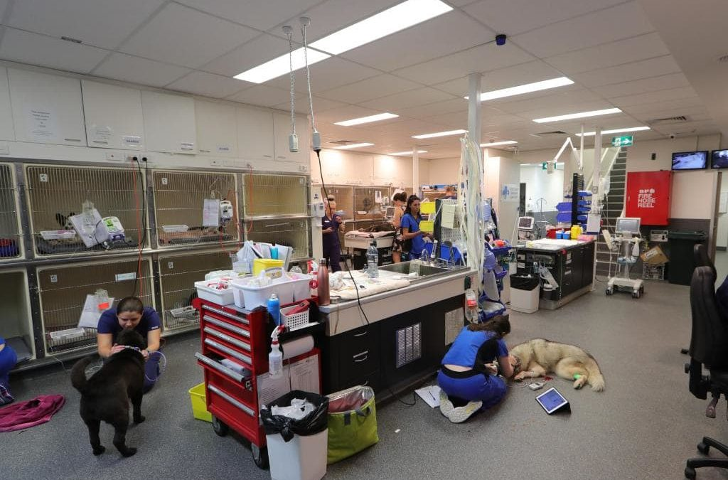 Inside Animal Emergency Service's Gold Coast Hospital