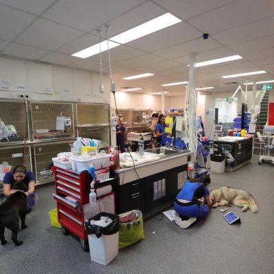 Inside Animal Emergency Service's Gold Coast Hospital