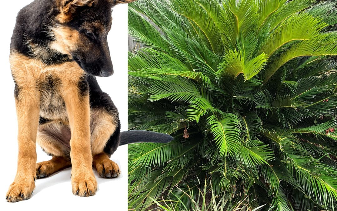 Common Plants that are Toxic for Pets