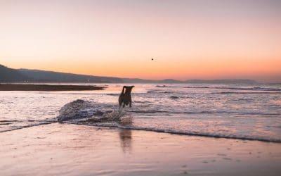 Doggy Friendly Beaches