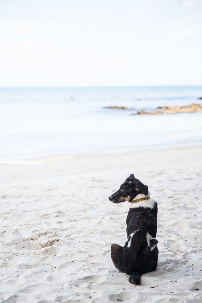 Dog on Beach 3