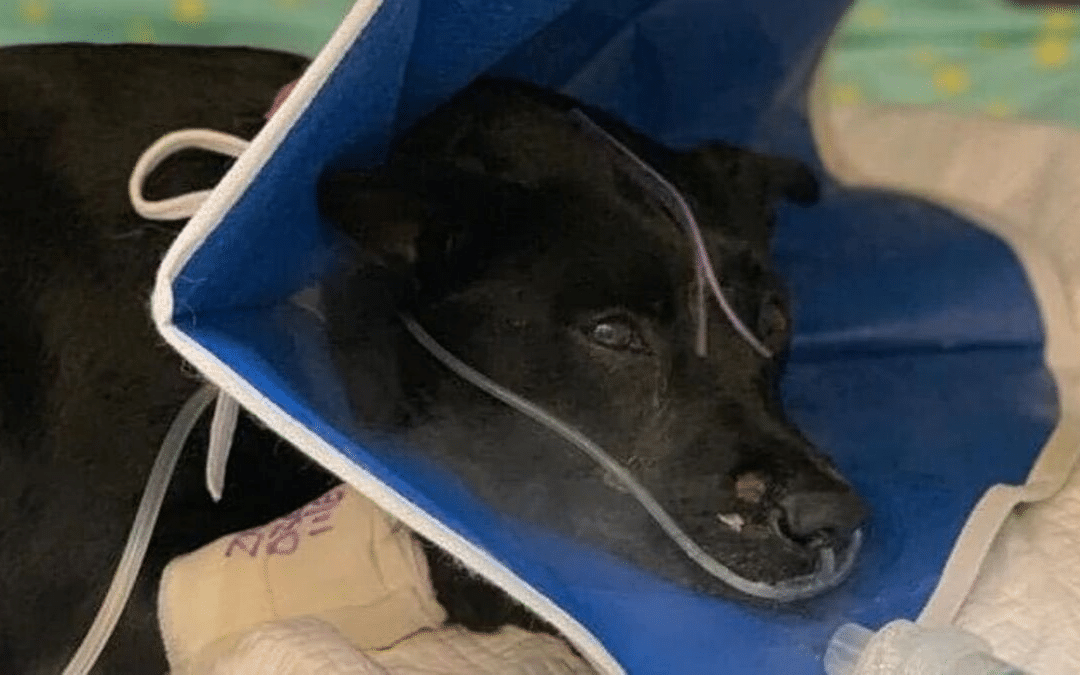 Dog that survived weekend house fire is in intensive care